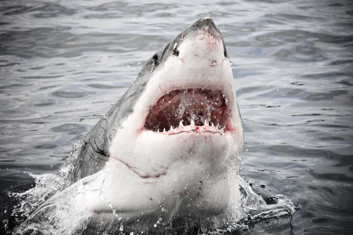 Woman killed in apparent shark attack while swimming in Maine
