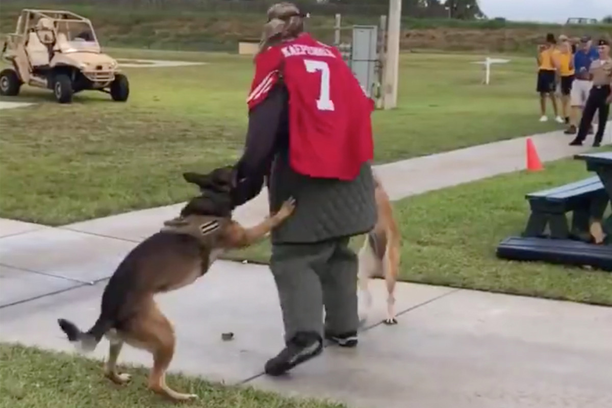 Navy probes event with dogs attacking 'target' in Kaepernick jersey