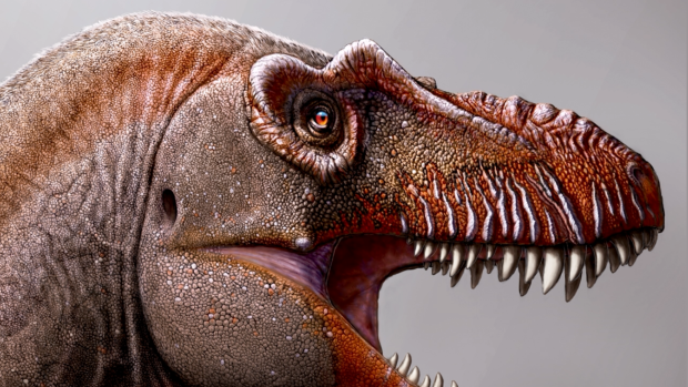 New dinosaur species related to Tyrannosaurus rex discovered by scientists in England