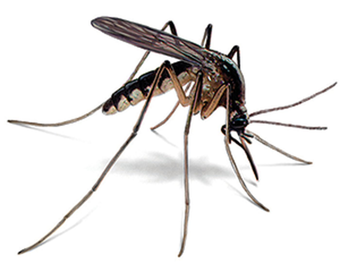 West Nile Virus-carrying mosquitoes still a concern