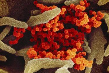 Nova Scotia now only has 1 active coronavirus case - Halifax