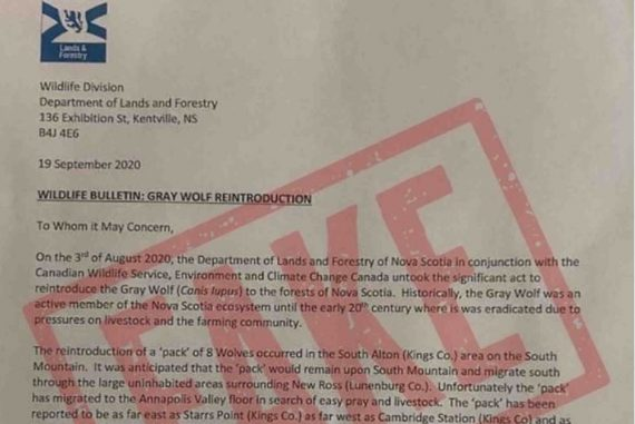 Forged letter warning about wolves on the loose part of Canadian Forces propaganda campaign that went awry