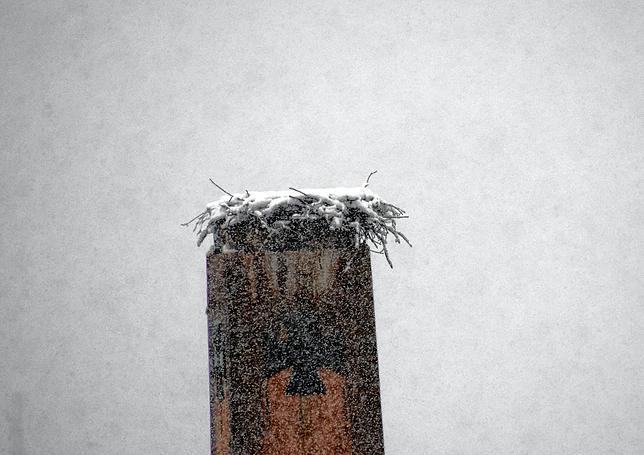 Snow-clad Stork nest in Stockach Upper city