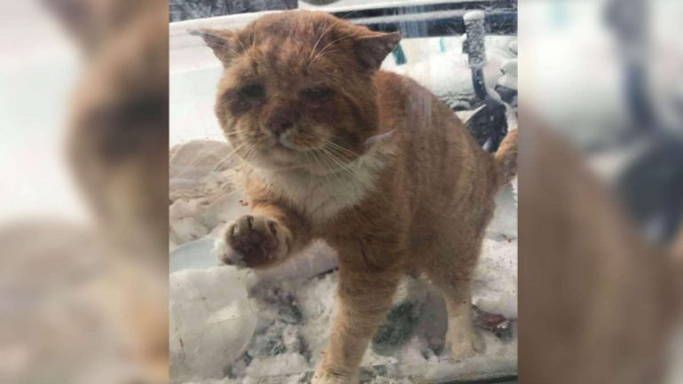 Strange Knocking Noise: Injured Cat scratches window pane and asks for help