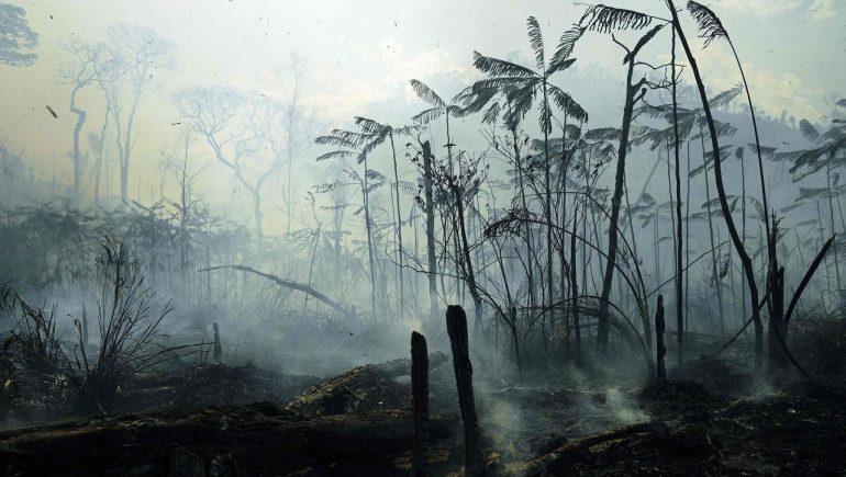 Rainforest: 43 million hectares of tropical rainforest destroyed - study by WWF