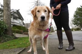 Surrey strata orders removal of dog deemed 'too tall' for bylaw