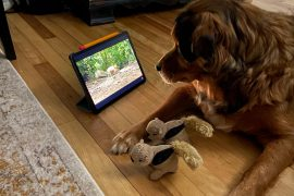 Dog sees the squirrel in the film: Millions of people laugh at his reaction