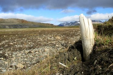 Huge remains from Siberia: Researchers found traces of DNA that are millions of years old