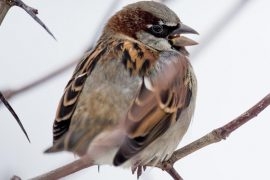 Most Common Winter Ornithology