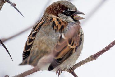 Most Common Winter Ornithology