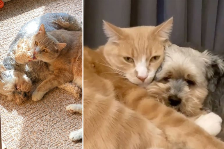 Precious cute: dog and cat behave like best friends