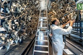 Berlin Natural History Museum is expanding - Berliner Morgenpost