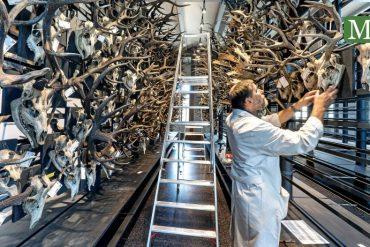 Berlin Natural History Museum is expanding - Berliner Morgenpost