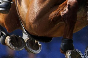 Equestrian sport - Number of dead horses after herpes infection - Sports