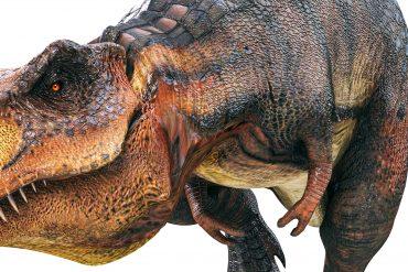 Teenage dinosaurs kept biodiversity low