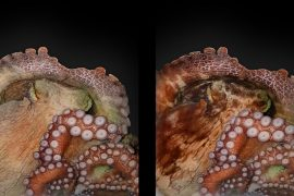 Oktopos