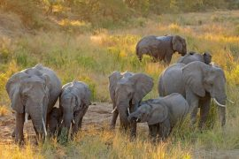 Elephants kill suspected poachers