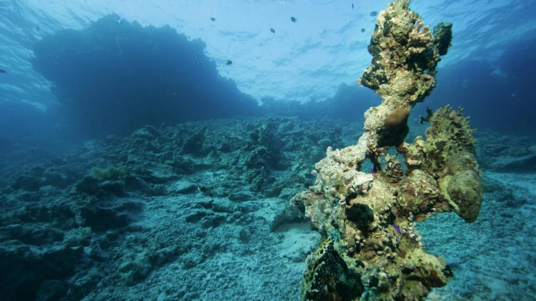 Significant increase in dead zones in the world's oceans