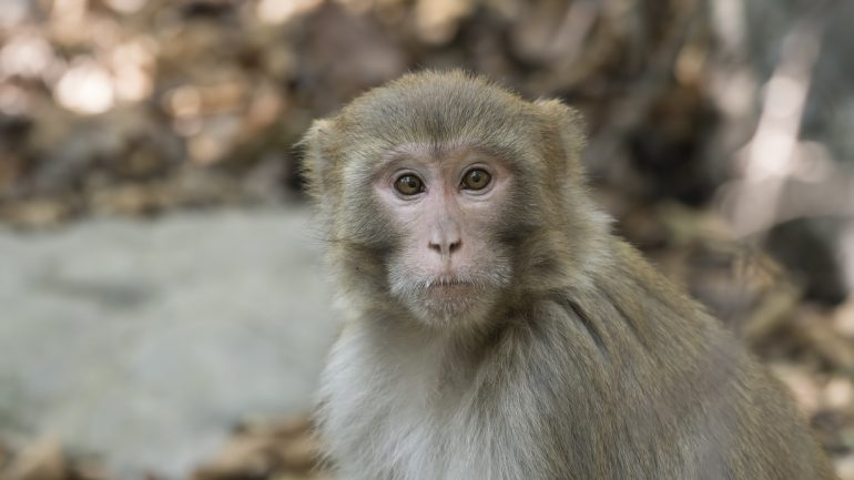 Species Conservation: Storm welcomes island monkeys together near Puerto Rico