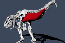 Swinging locomotion: t.  Rex used to run slower than humans
