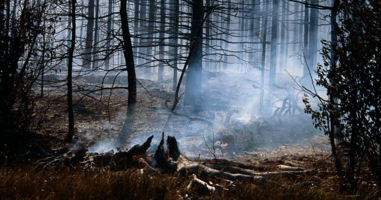 """""""Zombie wildfire"""" can hibernate in the ground and flare up again"""