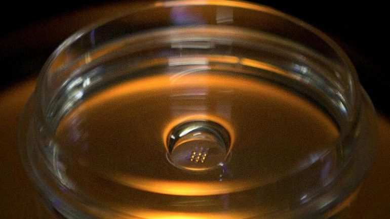 Science - Leopoldina: Allow Embryo Research in Germany - Knowledge