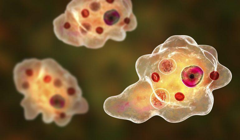 Periodontitis increases the risk of dementia