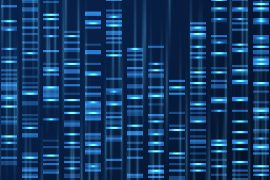 Genetics: the human genome will soon be complete