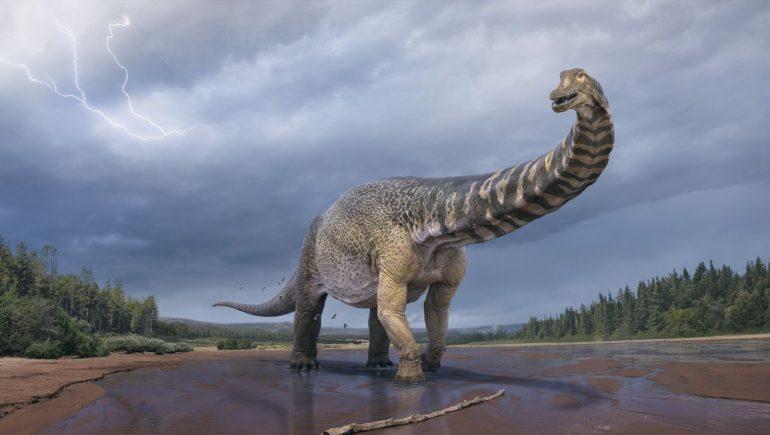Australotiton coperensis: a previously unknown dinosaur found in Australia