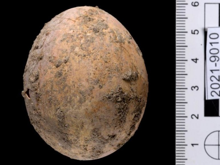Israel: Archaeologists find nearly 1000 years old chicken egg  free Press