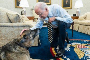Presidential family mourns loss of Biden German shepherd Champo