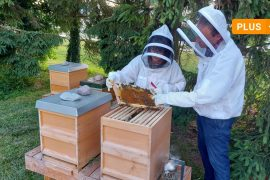 Neuberg-Schrobenhausen: Young beekeepers in the Neuberg area: why is beekeeping booming?