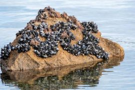 Video shows dramatic consequences of record heat in Canada: mussels boil and die at sea - Panorama