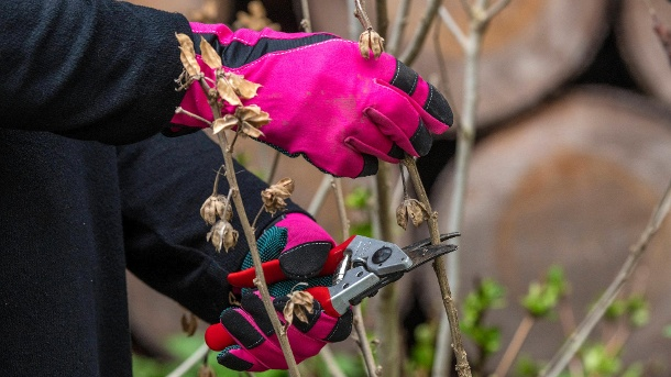 Bypass shears: They work with two sharp blades and are suitable for shrubs with thin branches.  (Source: Imago Images / Klaus W. Schmidt)