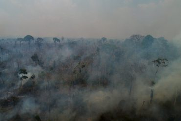 """Brazil's """"green lung"""": massive wildfires are raging in the Amazon"""
