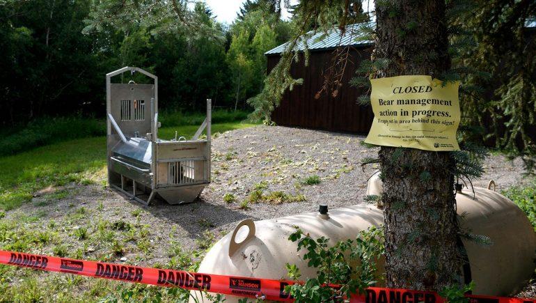 Montana: Bear shot dead after killing female tourist