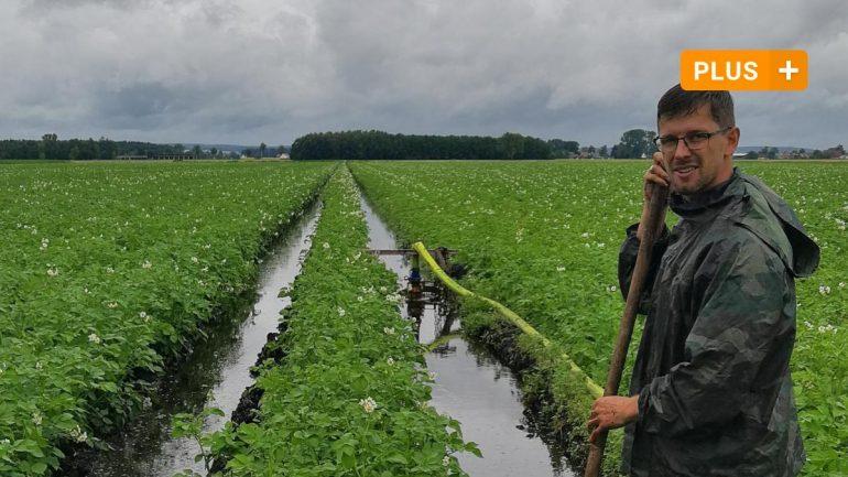 Neuberg: Rain in Neuberg region is causing trouble for potatoes and cherries