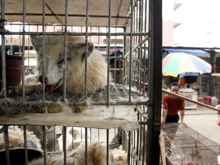 New Risk Grid for Wildlife Markets in Asia |  free Press