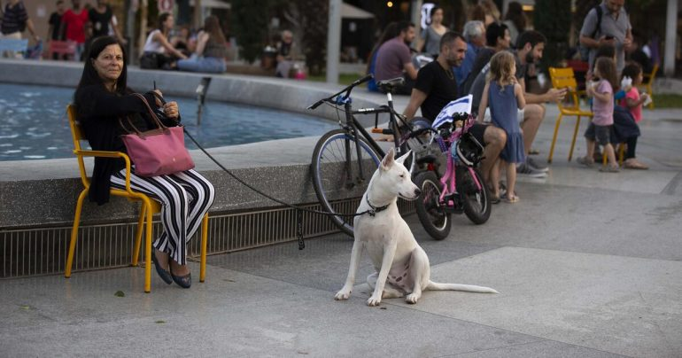 Tel Aviv collects DNA samples in fight against dog feces