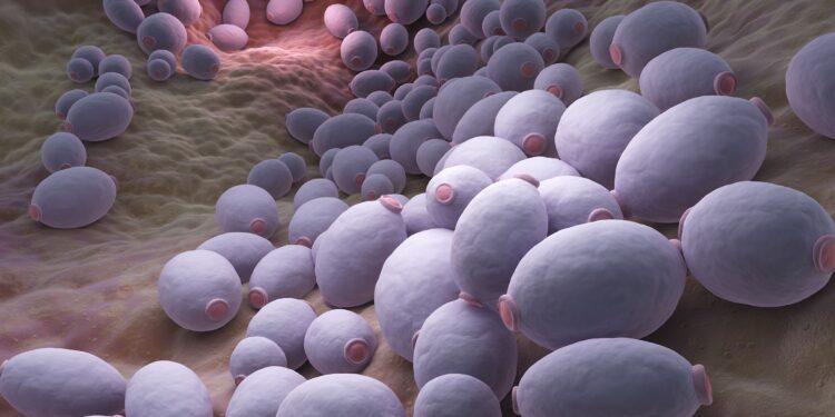 Graphic representation of Candida albicans type intestinal fungus.