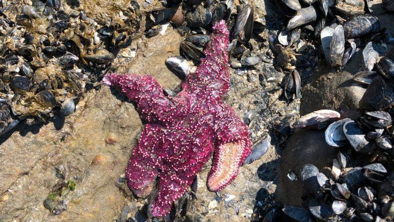 United States and Canada: Heat kills marine animals, puts fish at risk