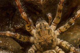 Hairy venomous spider reaches Heilbronn area – experts warn of panic