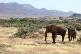 Little interest in elephant auction - DER SPIEGEL