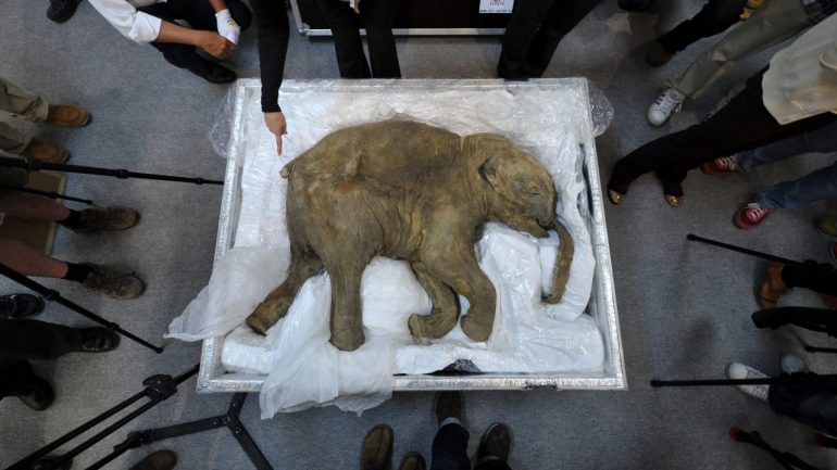 Research: Scientists want to rejuvenate the mammoth