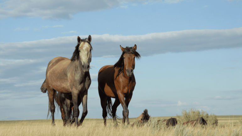 Bronze Age: Horse's milk as a recipe for success in European conquest