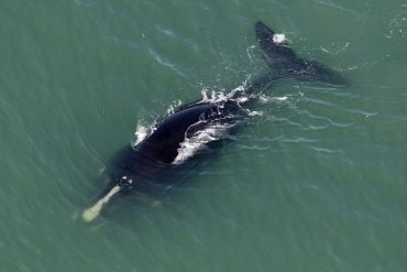 Climate change and species extinction puts warm water whales at risk