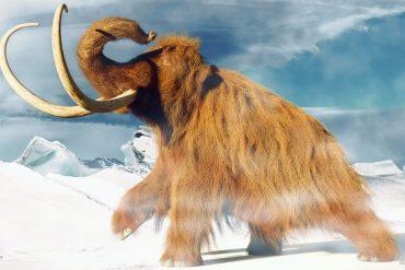 Mammoth must be resurrected - MANN.TV