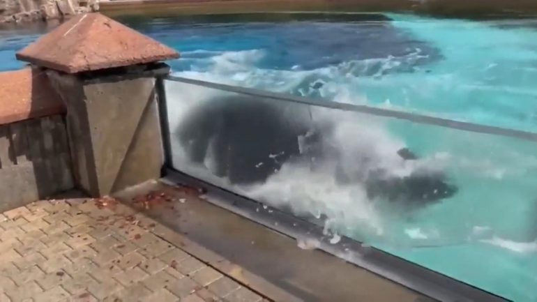 Ontario, Canada: Lonely orca woman bangs her head against pool wall