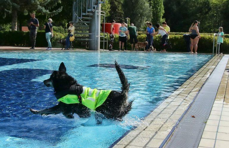 Senta, der sechsjährige Labrador-Mix, beim Hundebadetag in Hettstedt im September 2020.
