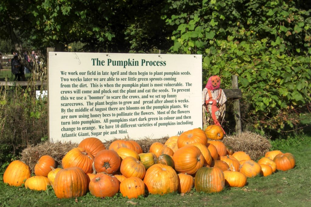 Pumpkin Farm is located in Fort Langley, southeast of Vancouver.